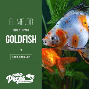 guia de alimentación del goldfish