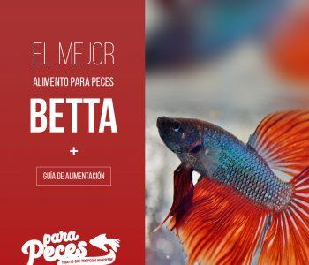 que comen peces betta guía tutorial