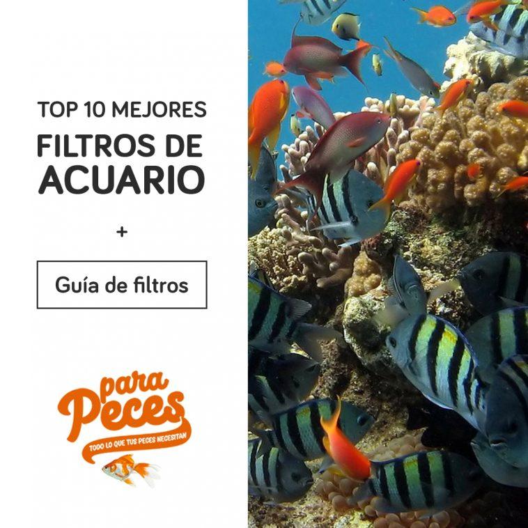 Top 10 filtros para acuarios | Los mejores filtros de acuarios de peces 2020