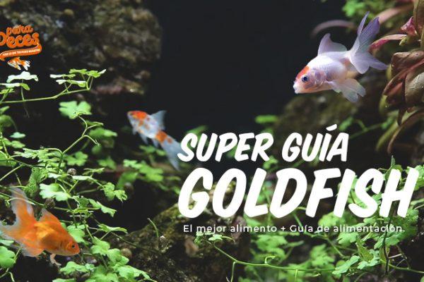 El mejor alimento para Goldfish + Guía de alimentación