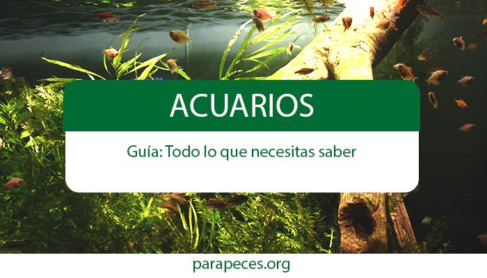 guia de acuarios actualizada para peces