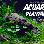 acuarios plantados toda la informacion sobre iluminacion led