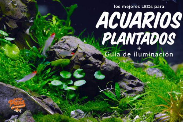 Las mejores lamparas LED para acuarios plantados + Guía de iluminación
