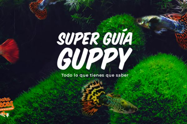 Pez Guppy | Cuidados y Todo lo que Tienes que Saber