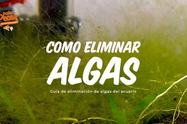 ¿Cómo eliminar algas de tu acuario?