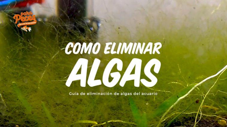 como elimino el alga