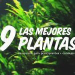 guia de acuarios plantados para novatos
