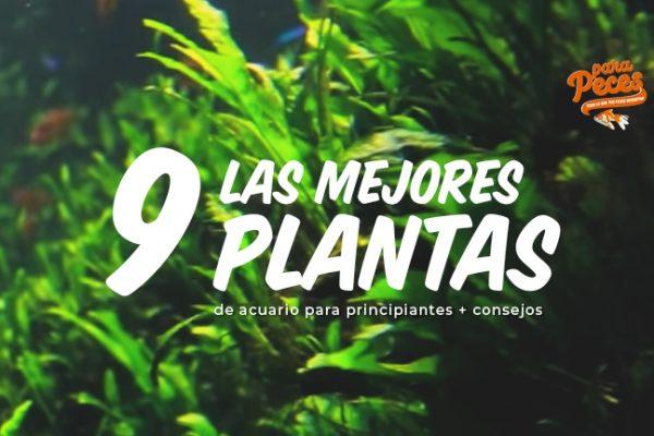Las Mejores Plantas de Acuario para Principiantes