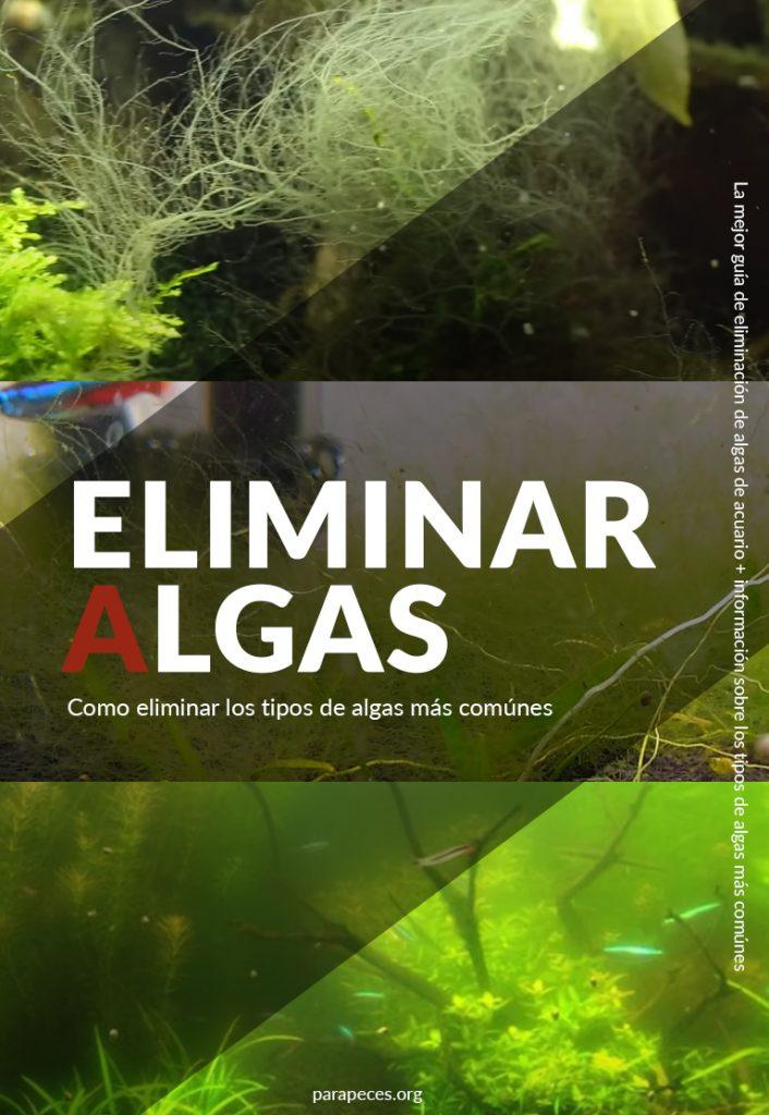 eliminar algas imagen de algas de acuario